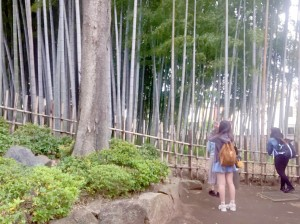 豪徳寺周辺散策_170427_0044
