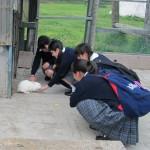 ⑤渡辺(滝沢うさぎ)1-150x150