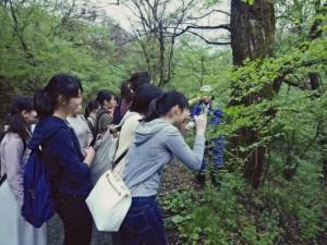 ⑰松繁(野鳥の葉)1-300x225