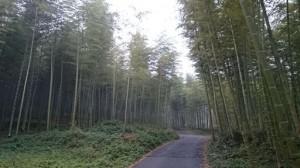 スクールトリップでの安吉の竹林