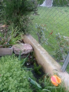 ホームステイ先のお庭に記念のローズマリーを植えました