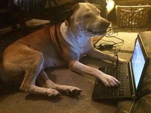 ホームステイ先の愛犬