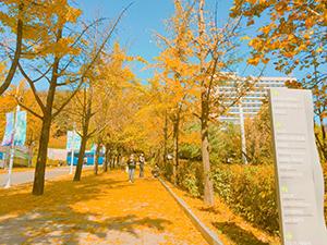 寒くなり落葉がきれいなキャンパス