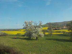 自然の多いイギリス