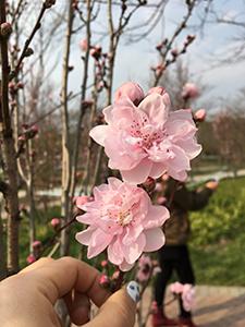 春を感じるようになりました