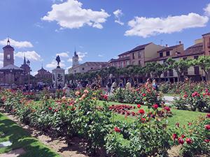 バラが綺麗に咲くセルバンテス広場