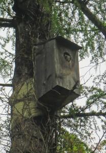 ⑲馬場(野鳥の森ムササビ)